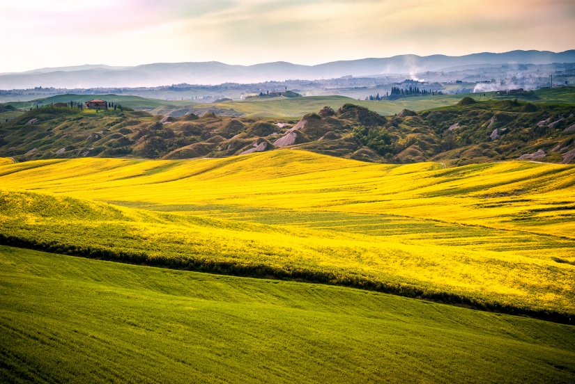 Val d 'Arbia, Tuscany, Italy. Hills cultivated with wheat and canola, with its yellow flowers. With background the Crete Senesi. Siena, Italy