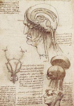 leonardo_da_vinci27s_brain_physiology